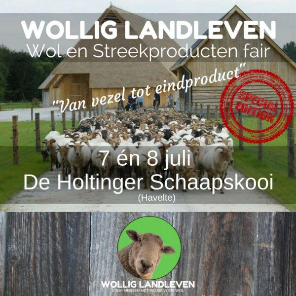 7-en-8-juli-Holtinger-Schaapskudde-Jpeg